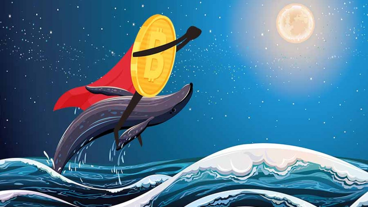 Whales — Indicatori e segnali — TradingView