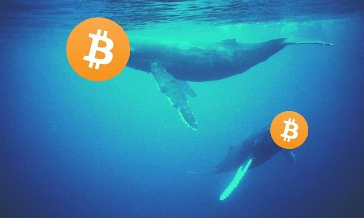 bitcoin_whales