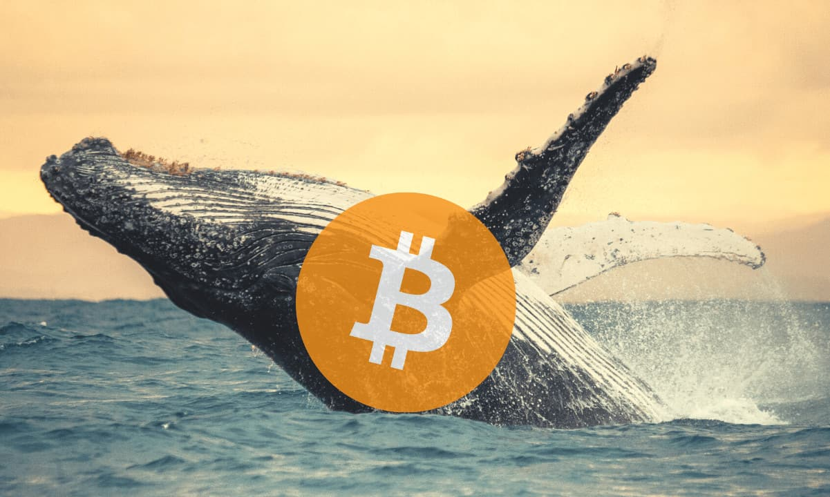Bitcoin Whale Accounts Surge in 2021 as Fiat Flows In