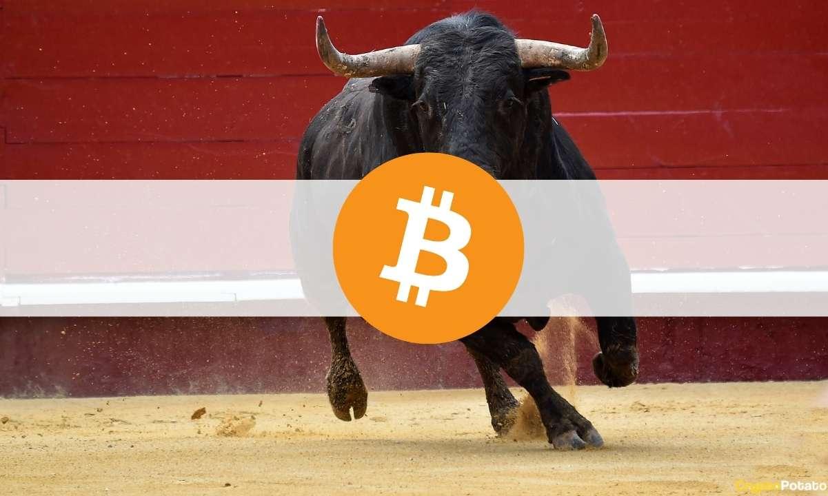 Bitcoin Analysts Turn Bullish Again as BTC Reclaims ,000