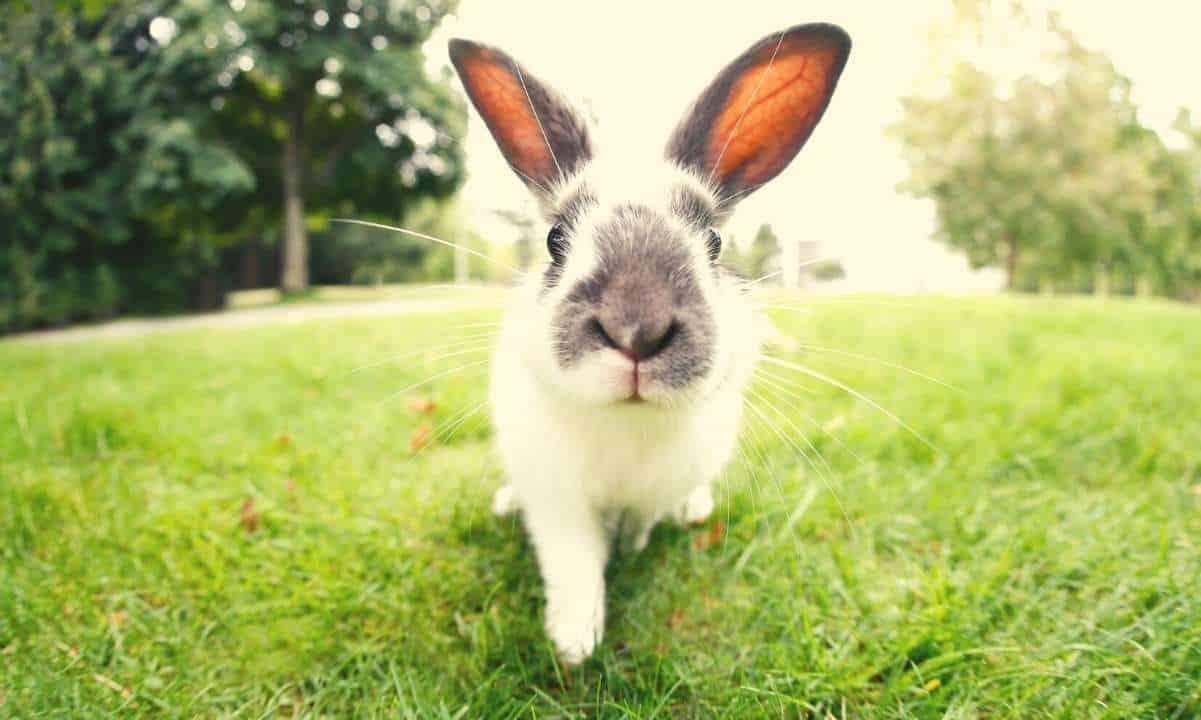 Pancake Bunny Exploit: $44 Million Stolen as BUNNY Token Crashed 99% in Seconds