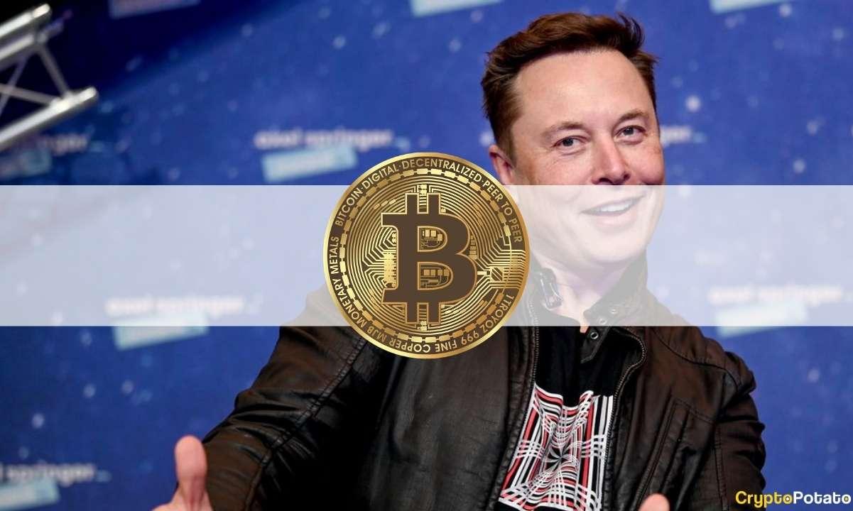 Elon Musk Killed Bitcoin's Bullish Week: The Crypto Weekly Recap