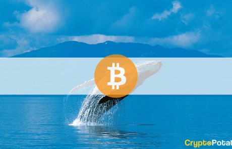 Buying Spree: Third-Largest Whale Buys $170M Worth of BTC in Two Weeks