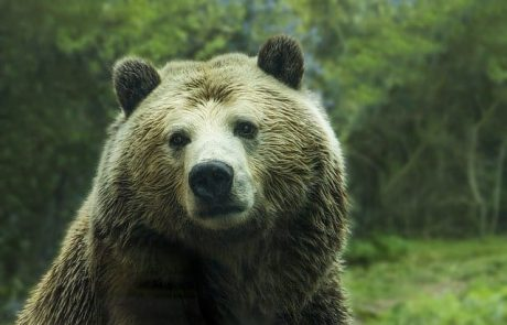 Crypto Community Bearish on Bitcoin, Predicts $6,000 Soon (But There's a Caveat)