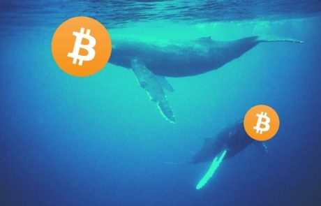 Report: After Buying Bitcoin's Bottom In March, Whales Continue Accumulating