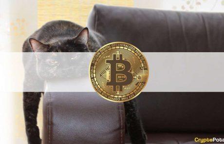 Volume & Interest Decrease as Bitcoin Still Amid $30K: The Weekly Crypto Recap