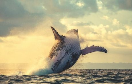 Mysterious Bitcoin Whale Moves $933 Million – 0.5% Of All BTC
